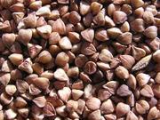 Куплю зерно гречихи (гречки)