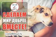 Животным помощь,  информационная поддержка владельцам